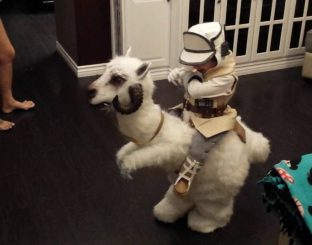 A child in a tauntaun suit
